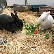 Rabbits: Oliver and Lily