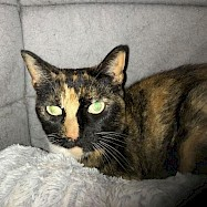 Cats: Lilly